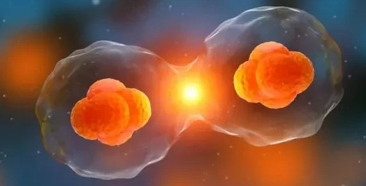 为什么说吃小分子活性肽会让身体更健康?
