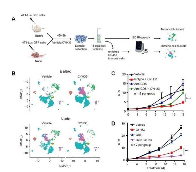 揭示PI3K抑制剂管控肿瘤免疫体制